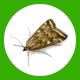 polilla icon